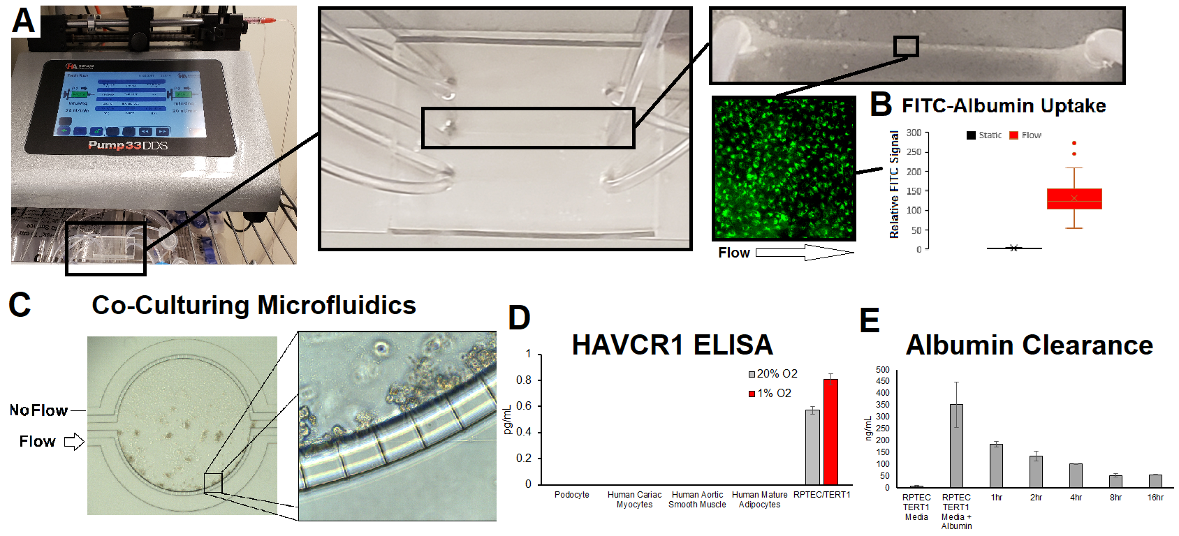 Renal Proximal Tubule Cell microfluidics. A-B) Setup for simple fluidics, allowing for passing over FITC-albumin to observe uptake (B). C) More complex coculture setup for microfluidics. D) HAVCR1 damage response as a result of hypocia. E) Albumin uptake and degradation using ELISA.