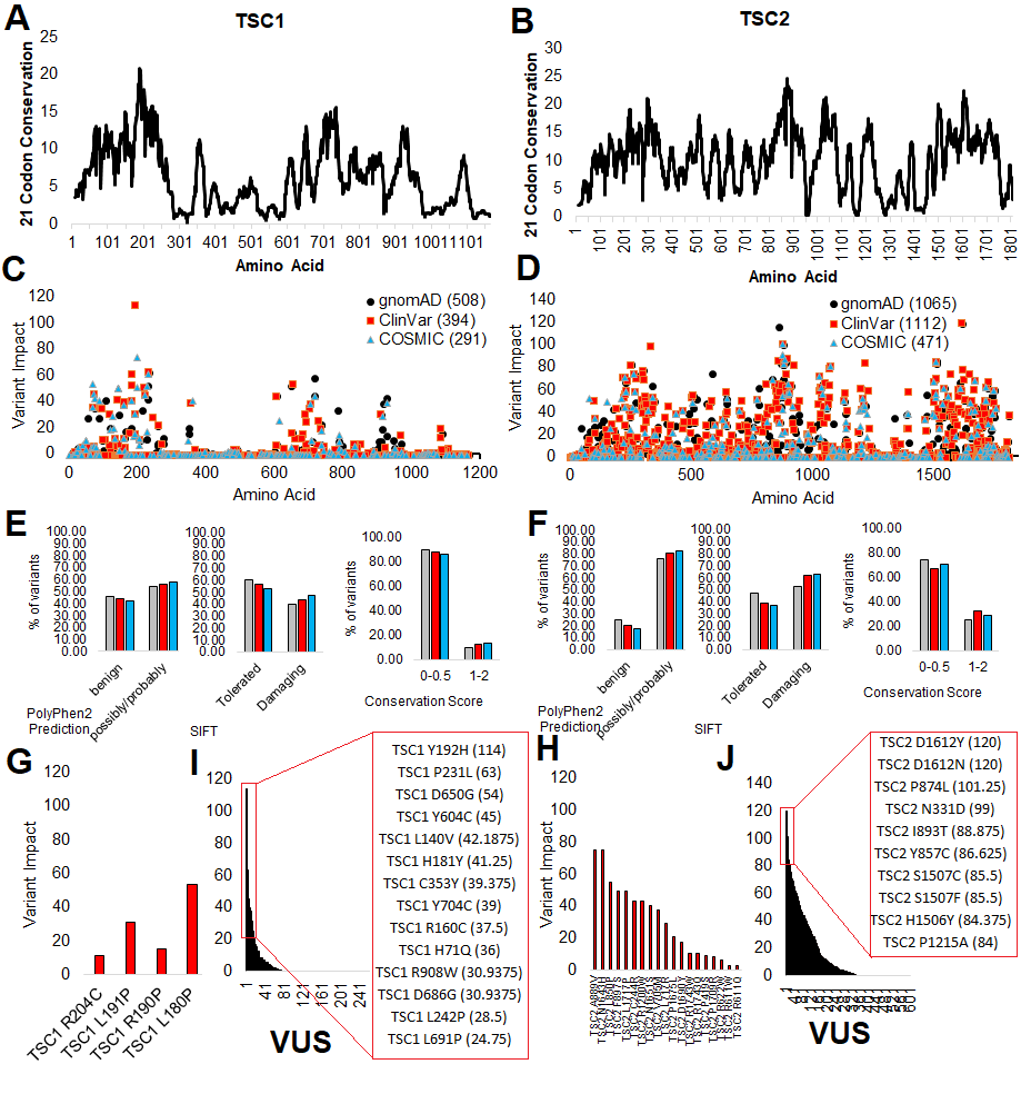 TSC1 and TSC2 genomic variants. A-B) Conservation analysis of TSC1 (A) and TSC2 (B) amino acids. C-D) Variant impact scores for TSC1 (C) and TSC2 (D) for protein coding SNPs identified in gnomAD (black), ClinVar (red) and COSMIC (blue). E-F) Predicted functional outcomes for variants of the 3 databases (colors same as C-D) in TSC1 (E) and TSC2 (F) using PolyPhen2 (left), SIFT (middle), or our conservation score (right). G-H) Pathogenic variants from ClinVar for TSC1 (G) and TSC2 (H) shown for our variant impact scores. I-J) VUS from TSC1 (I) and TSC2 (J) showing variant impact scores and listing the top-ranking variants that will be studied in this grant.